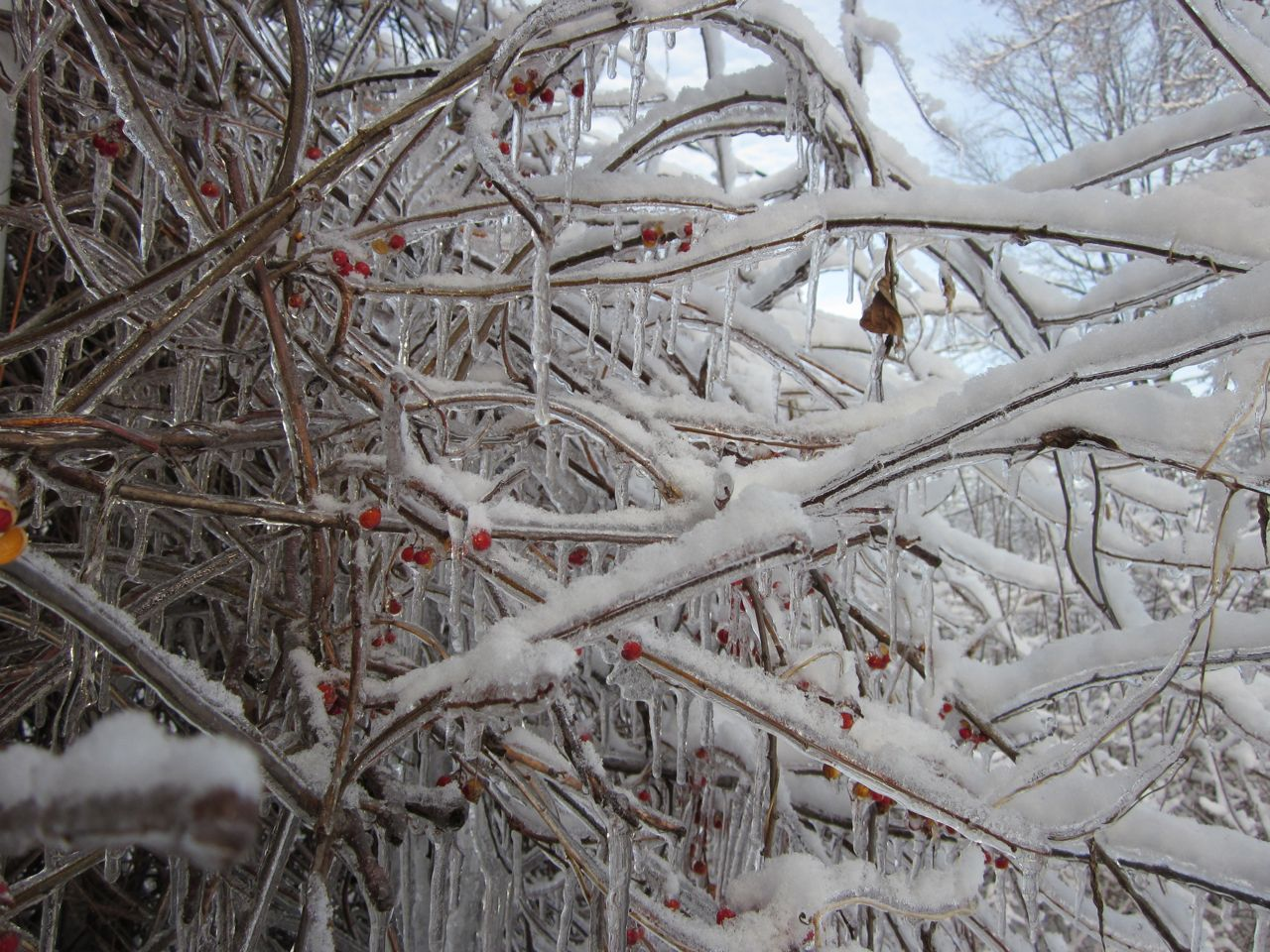 Essays on frost poetry