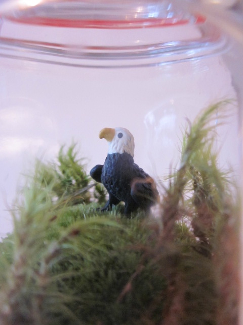 Close-up of eagle.